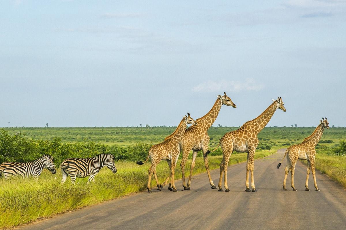 12 Day Botswana, Kruger & Victoria Falls