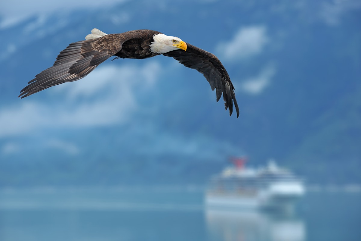 14 day Highlights of Canadian Rockies and luxury Alaska Cruise with flights
