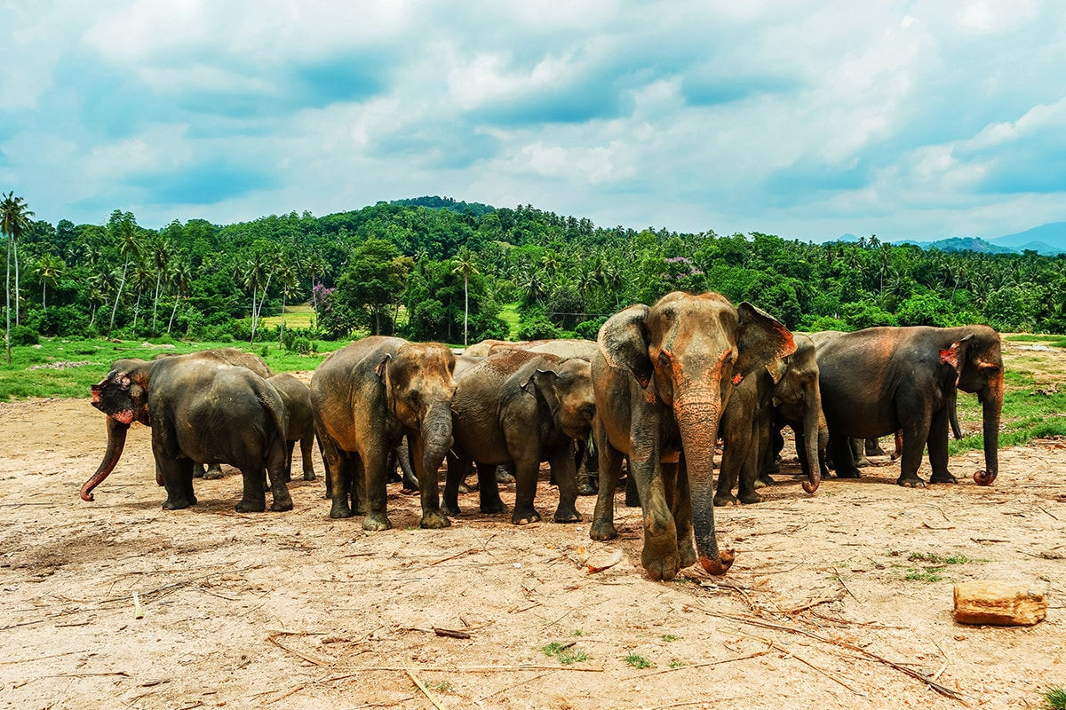 Luxury Sri Lanka tour with Maldives resort break