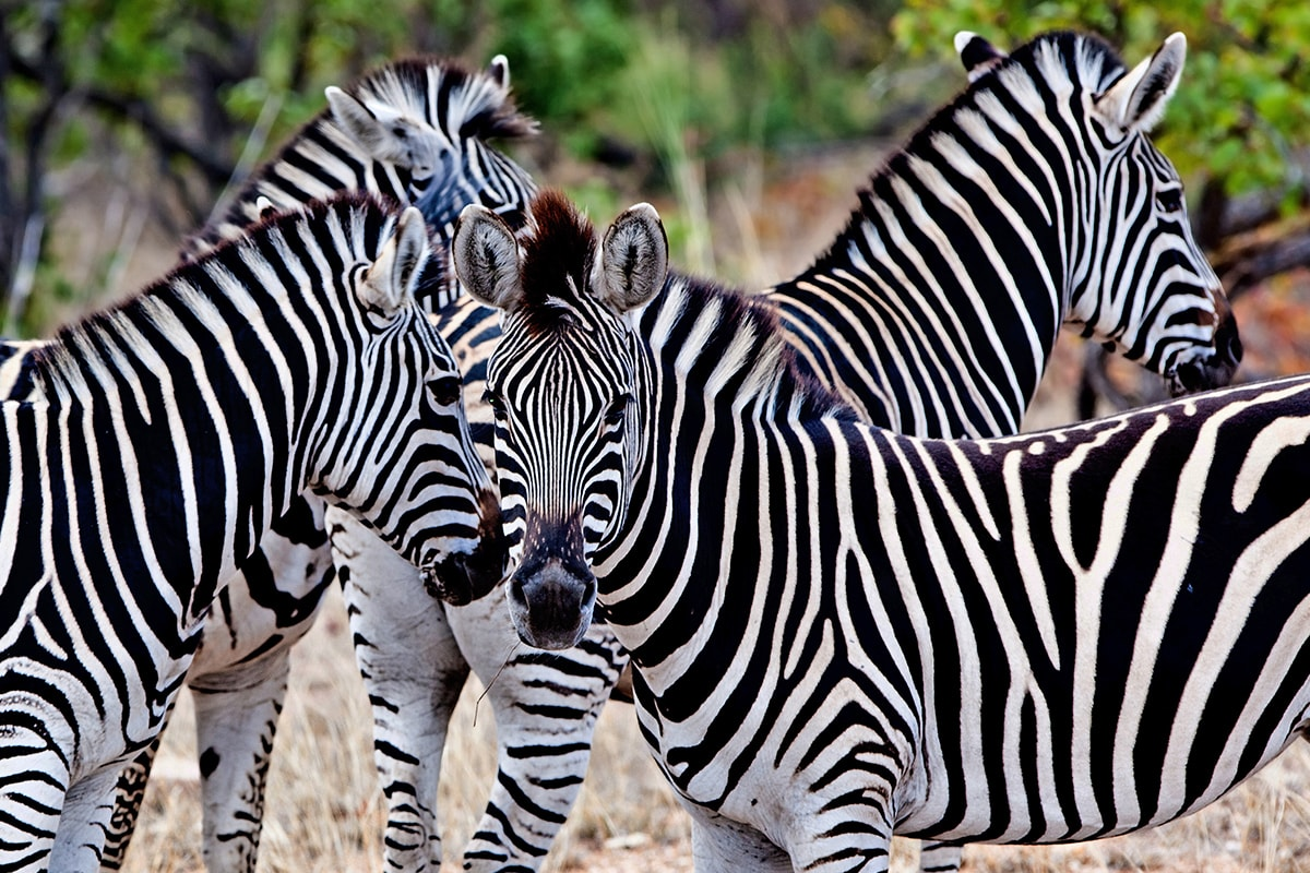 9 Day Kruger Safari with flights
