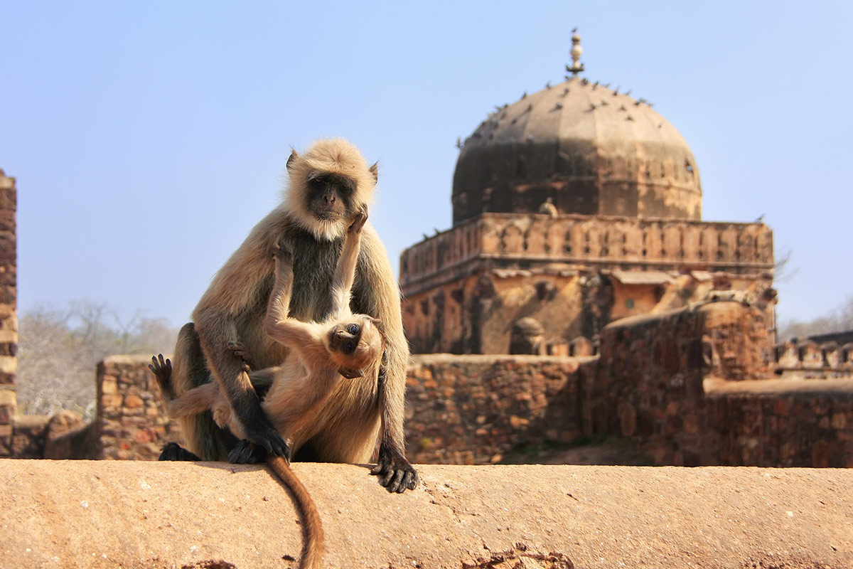 11 day luxury Golden Triangle and Ranthambore Tigers tour with flights