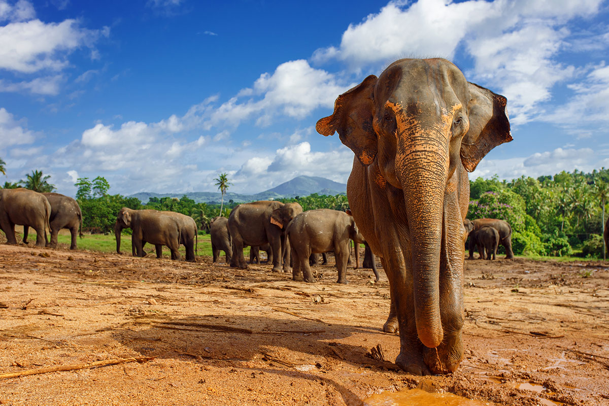11 day Sri Lanka Culture and Wildlife tour with flight