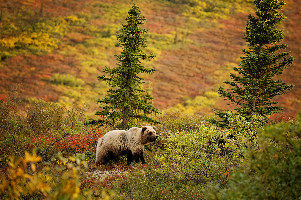 20 day Alaska Explorer tour with Inside Passage cruise and flights