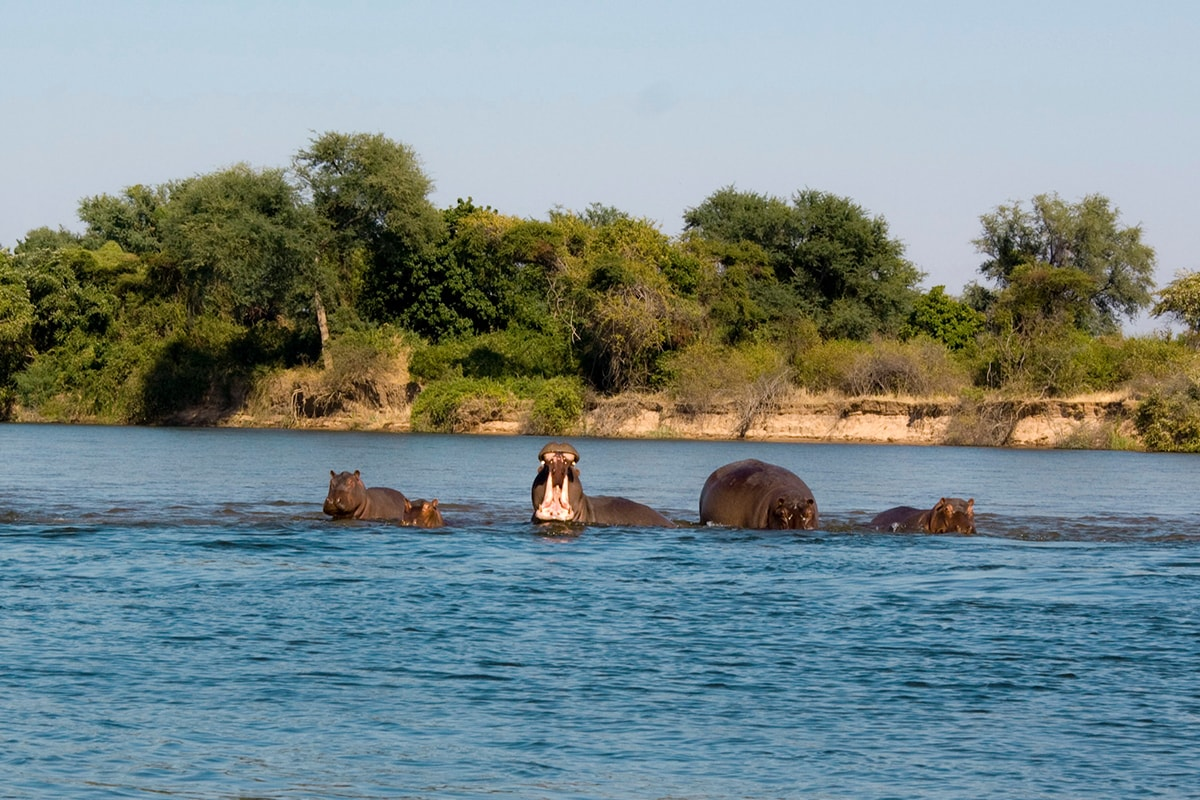 15 day Kruger to Cape Town African safari with flights