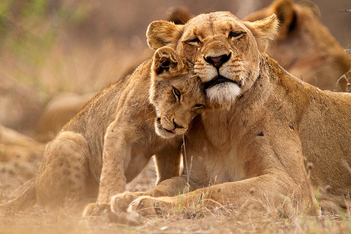 9 day Kruger safari with flights